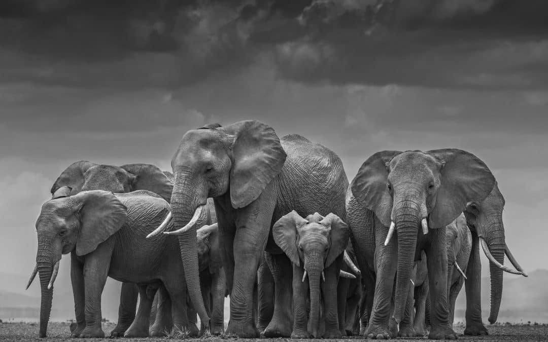 David Yarrow: An Inside Look at Photographing Wildlife